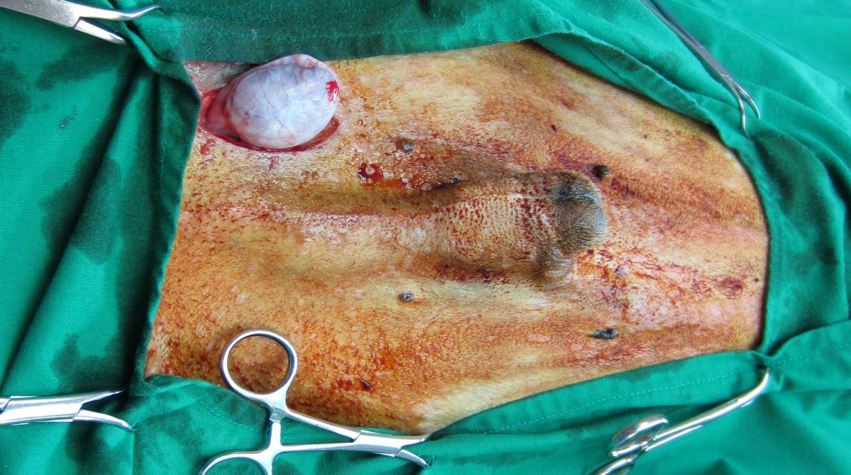 sex pere comment se raser les testicules sans se couper