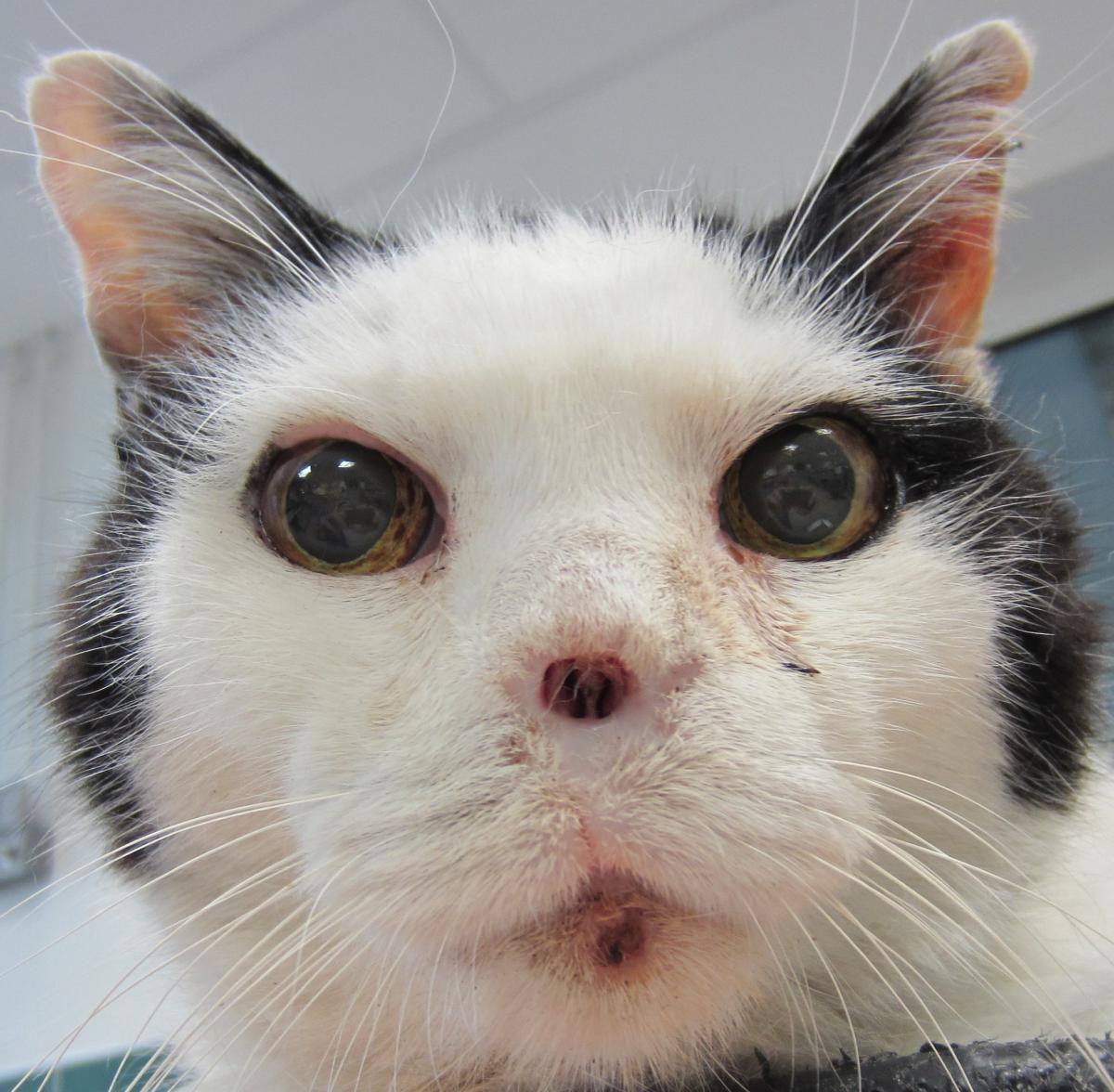 Donn es physiologiques sur le chat fiches conseils for Repulsif pour chat sur tissu pour interieur