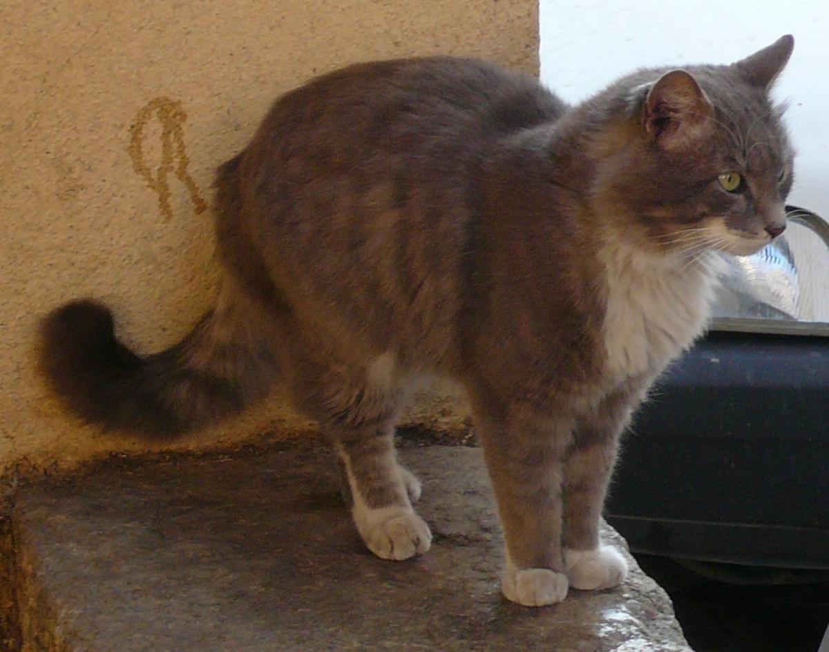 Le Territoire Chez Le Chat Chat