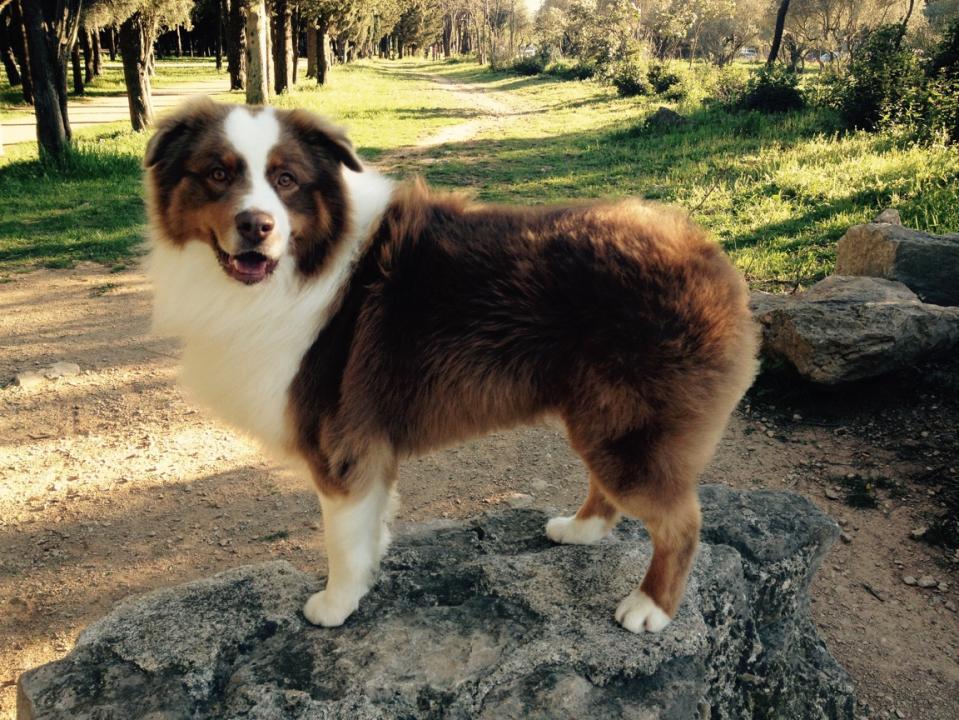 transité intestinal du chien